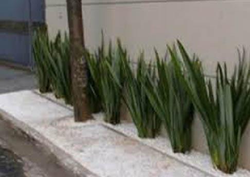 Viveiro chapec dacko brasil florestal f rmio verde for Foto contemporanea de jardin
